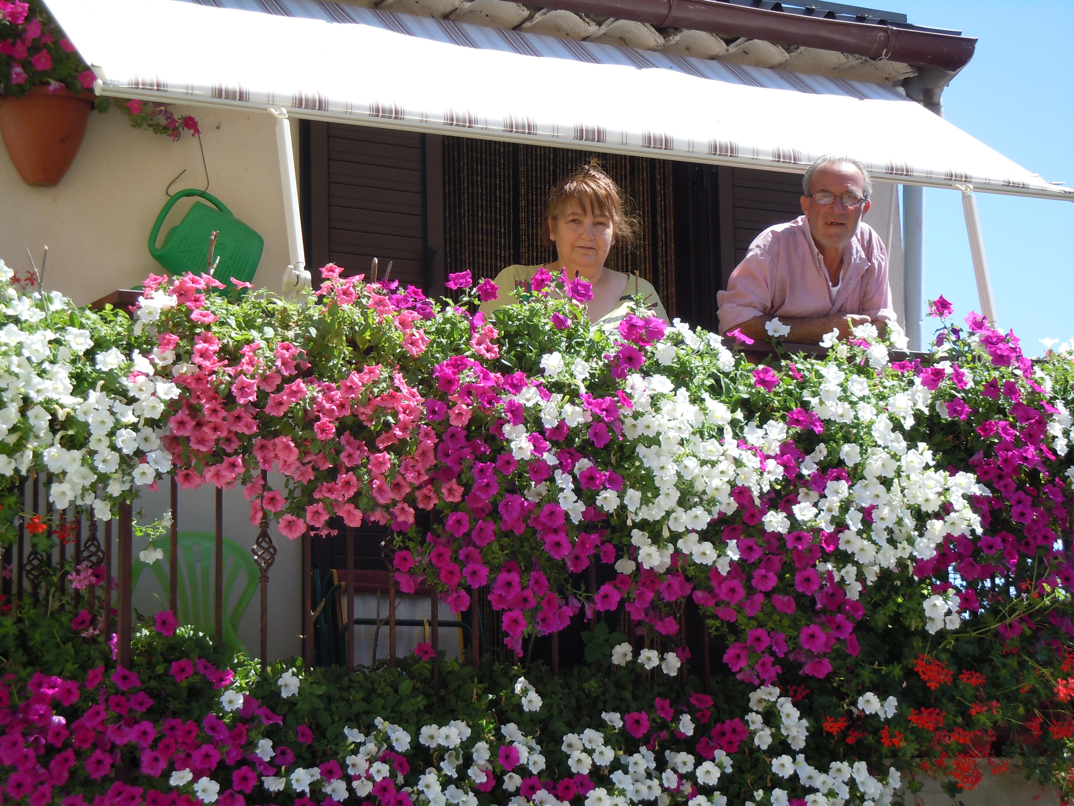 Balconi in fiore il nuovo corriere della sila for Surfinia balcone